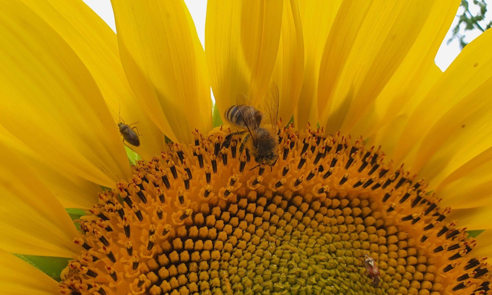 Smart Hive Technologies